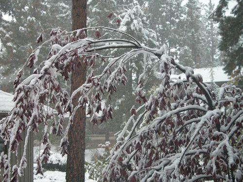 Snowy2